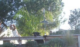 Merlin Style Gardening