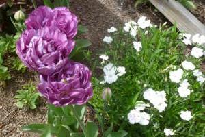 Spring in Merlin's Garden