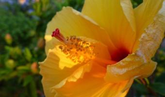 Scenes from the Garden