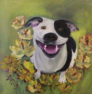 Harry The Pit Bull 001